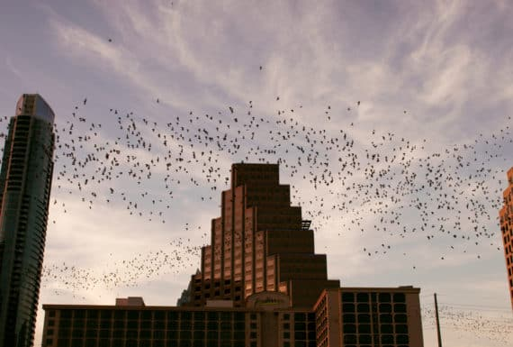 what to do in austin bat cruise 4 570x385 - What To Do in Austin: The Ultimate Guide to Austin Texas